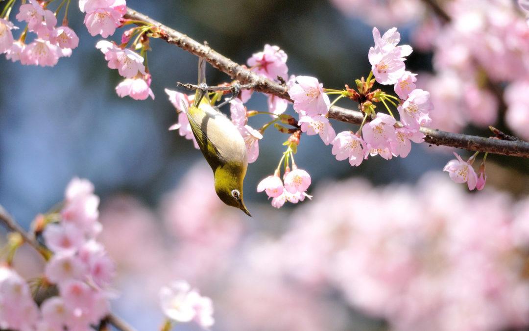 Március, tavasz, pihenés… :)